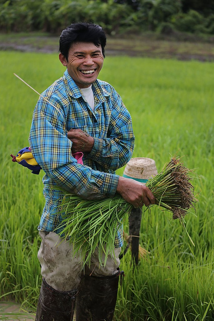 Impact of COVID-19 on Rice Farmers in Southeast Asia