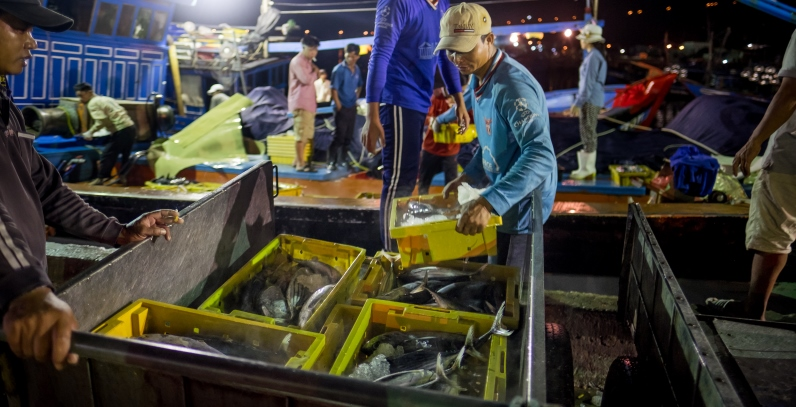 Unloading fishing catch in Danang, Vietnam. Photo: Linh Pham/Getty Images