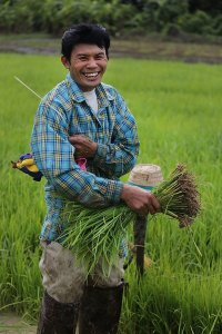 Rice farmer iin Thailand