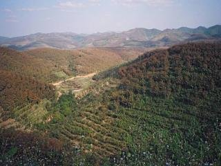 Rubber terraces in Southeast Asia
