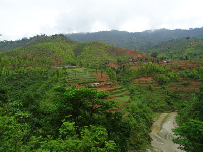 Rice terraces surrounded by trees growing on uncultivated land in Kabrhe Palanchok District, Nepal. Photo: Jefferson Fox.